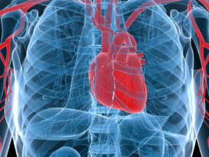 Home Care Services in Edgewood PA: Improve Your Senior's Heart Health